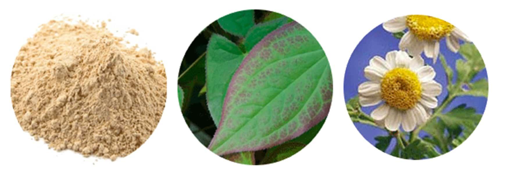 Semenax results plants